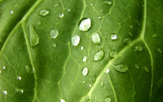 Water on leaf wallpapers and stock photos