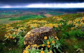 Farm Land Wild Flowers wallpapers and stock photos