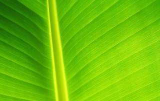 Random: Light Green leaf