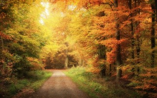 Random: Autumn Road & Forest