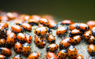 Ladybirds wallpapers and stock photos