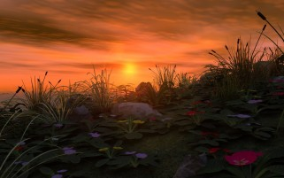 Orange Sky Plants & Flowers wallpapers and stock photos