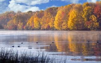 Autumn Trees Lake Ducks Grass wallpapers and stock photos