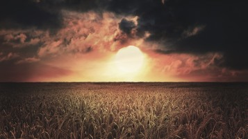 Random: Dark Sunset & Wheat Field