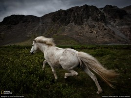 Mountains Landscape & Horse wallpapers and stock photos