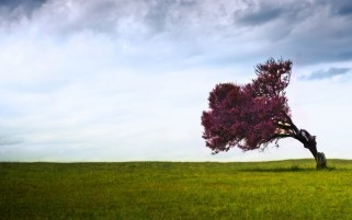 Purple Tree Grass & Clouds wallpapers and stock photos