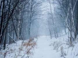 Canada Quebec Winter Forest wallpapers and stock photos