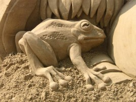 Sand Froggy wallpapers and stock photos