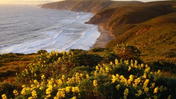 California Sea Yellow Lupine wallpapers and stock photos