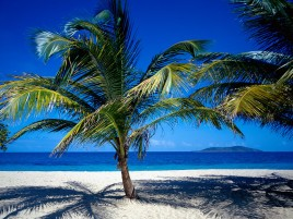 Low Palm Tree On The Beach wallpapers and stock photos