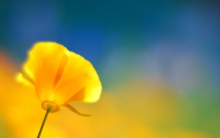 Yellow Flower wallpapers and stock photos