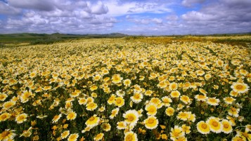 Plain Flowers California wallpapers and stock photos