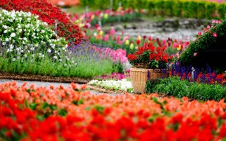 Flower Garden wallpapers and stock photos