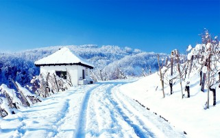 Winter White Landscape wallpapers and stock photos