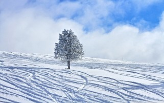 Winter Snowy Tree wallpapers and stock photos