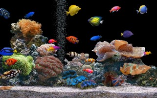 Tropical Fish wallpapers and stock photos