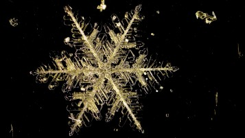 Next: Microscopic Snow Flake