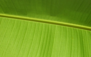 Green leaf wallpapers and stock photos