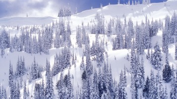 White Winter Park wallpapers and stock photos