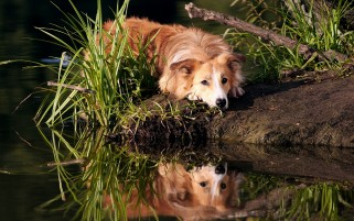 Dog wallpapers and stock photos