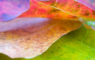 Nice leaf wallpapers and stock photos