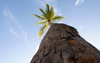 Palm Tree wallpapers and stock photos