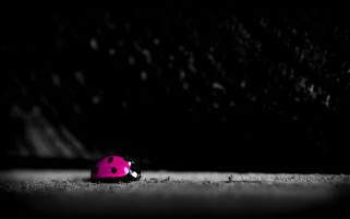 Pink Ladybug wallpapers and stock photos