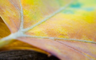 Next: Multicolor leaf