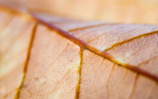 Random: Brown leaf