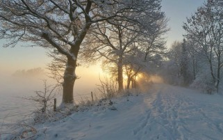 Foggy Winter Path & Trees wallpapers and stock photos