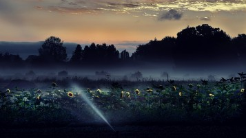 Sun Flowers Darkness wallpapers and stock photos