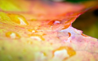 Leaf effects wallpapers and stock photos