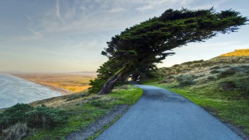 Cross Tree Road & Nature wallpapers and stock photos