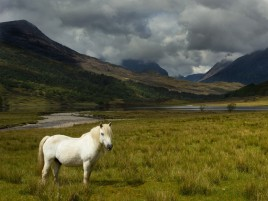 United Kingdom Scotland Pony wallpapers and stock photos