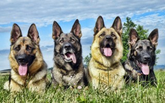 Dogs wallpapers and stock photos
