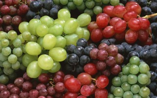 Grapes wallpapers and stock photos