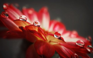 Random: Flower Water Drops
