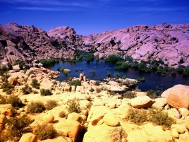 Random: Joshua Tree National Park