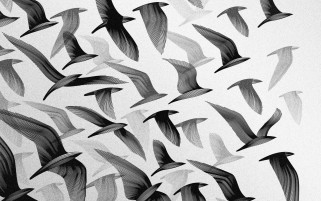 Aves ilustraciones wallpapers and stock photos