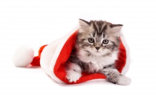 Christmas Kitty wallpapers and stock photos