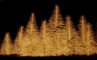Lighted Trees wallpapers and stock photos