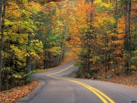 Random: Curvy Autumn Road Forest