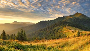 Hilly Forest Mountains & Grass wallpapers and stock photos