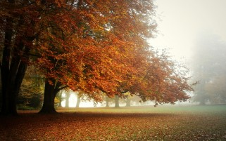 Big Autumn Tree & Leaves wallpapers and stock photos
