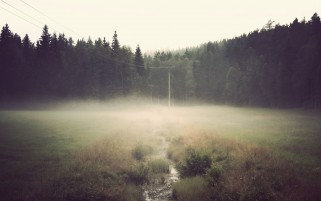 Random: Foggy Forest Mist & Creek