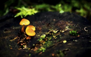 Previous: Mushrooms