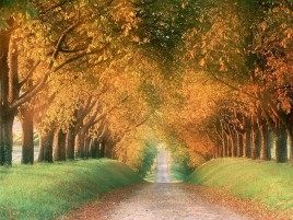 Random: Hilly Autumn Avenue