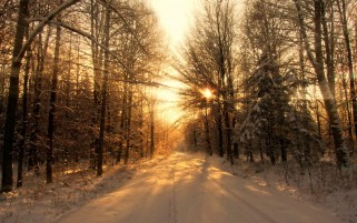 Winter Forest Road & Sun Light wallpapers and stock photos