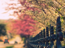 Flowered Tree wallpapers and stock photos