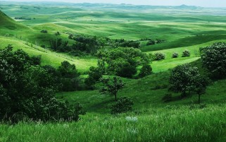Grass Fields & Trees wallpapers and stock photos